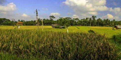 http://travelhighlighter.com/Rice-Paddy-Workout/